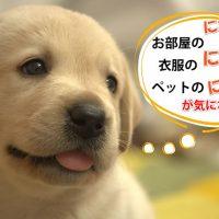 愛犬専用 NC わん